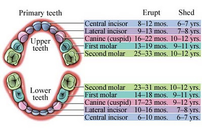 Extracting Baby Teeth To Make Room